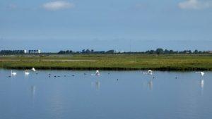 Fietsen Lauwersmeer