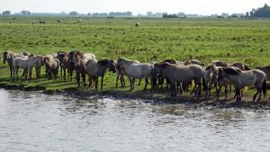 Fietsroute Lauwersmeer