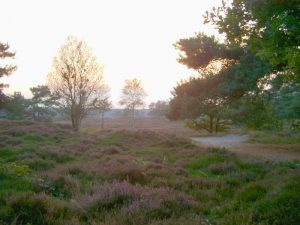 Bakkeveen Heide